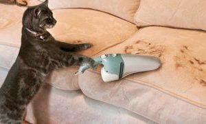 Уборка шерсти домашних животных на дому